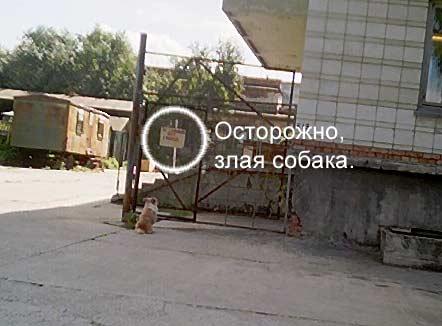 http://technoart.ru/~megath/pics/dog.jpg