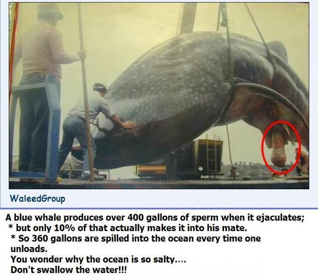 http://fjoe.uni.n-sk.ru/~fjoe/whale.jpg