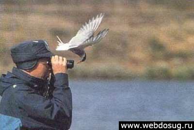 http://www.webdosug.ru/cool/img/1a.jpg