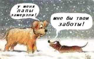 http://anekdotov.net/pic/pic2/1802winterdog.jpg