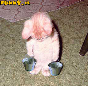 http://www.tatshop.ru/humor/1067433201.jpg