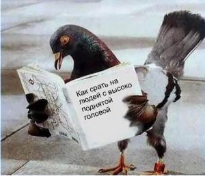 http://www.zmeeey.nm.ru/pictures%20lj/holub.jpg