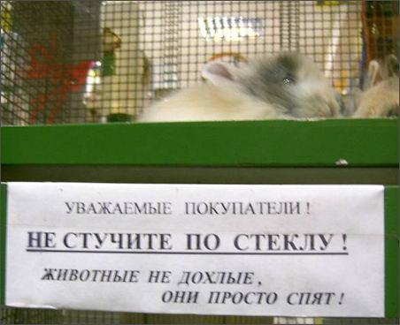 http://www.nnm.ru/design/pict/pets.jpg