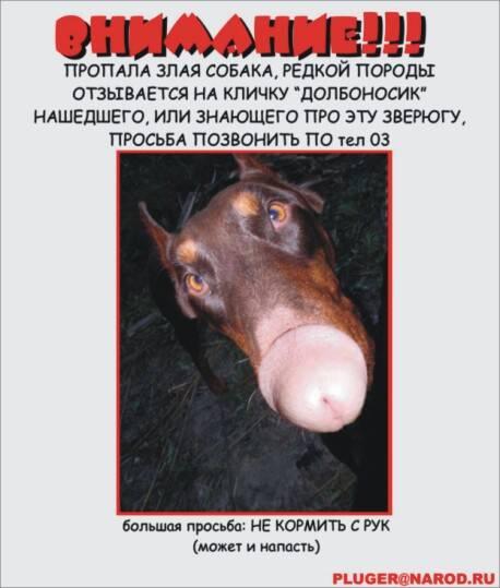 http://bbs.ogo.ru/~eagle/pix/dolbonosik.jpg