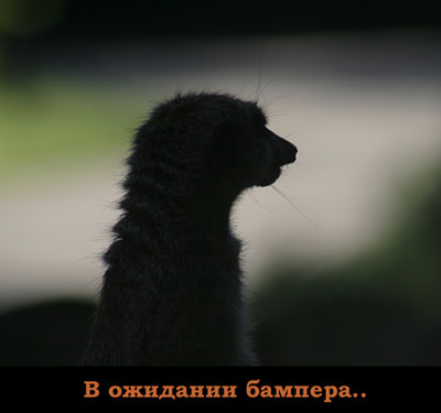 http://voffka.com/archives/gde_bamper.jpg