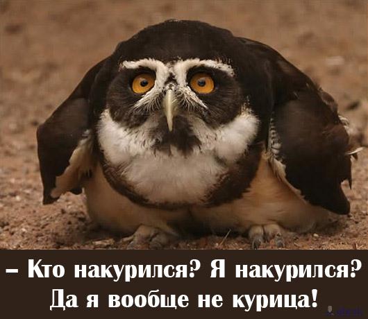 http://fishki.net/pics5/sova.jpg