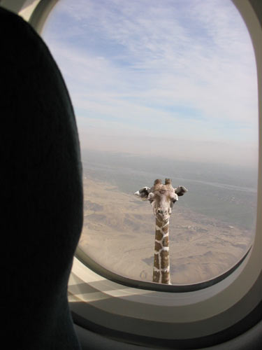 http://ziza.ru/data/upimages/giraffe.jpg
