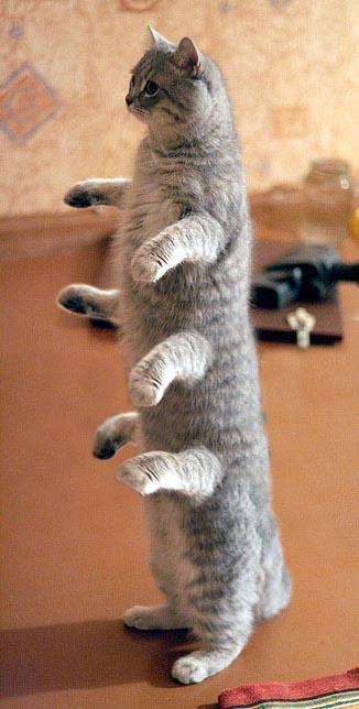 http://img33.imageshack.us/img33/4677/cat24eo.jpg