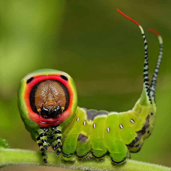 http://ljplus.ru/img/d/a/dashing/060330_caterpillar.jpg