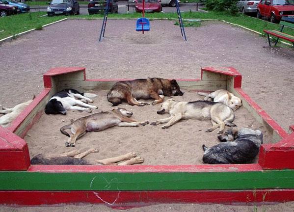 http://www.ljplus.ru/img/a/i/ainger/dogs.jpg