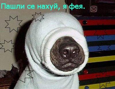 http://img.atento.ru/ya_feya.jpg