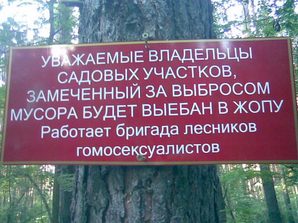 http://files.eltheriol.com/site/img/2007/forestgomo.jpg