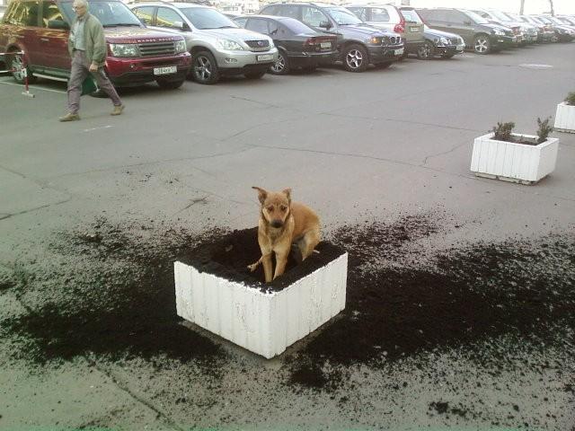 http://photofile.ru/photo/fishki_net/3150124/66746311.jpg