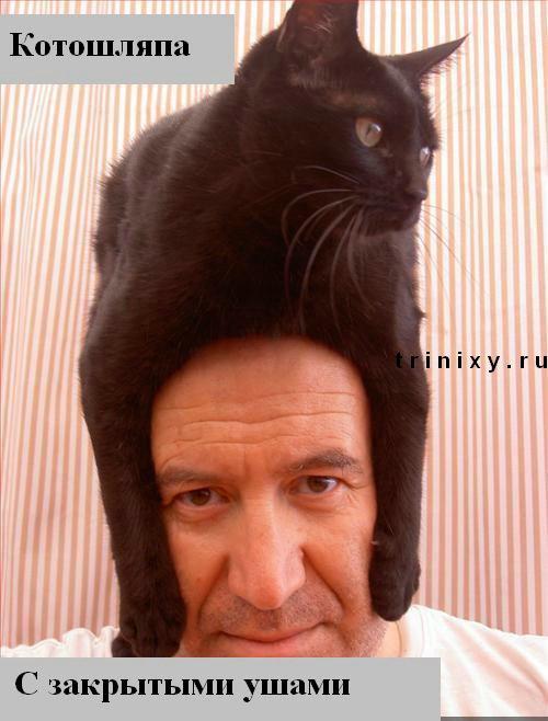 http://ru.trinixy.ru/pics3/20080118/funny_cats_13.jpg