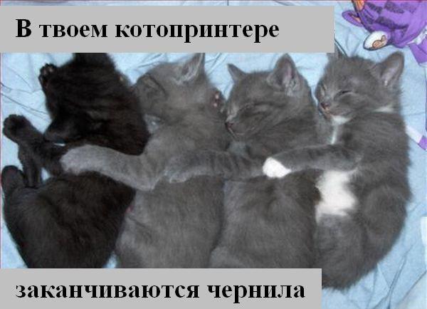 http://i.bigmir.net/img/prikol/images/large/6/4/112446_167913.jpg
