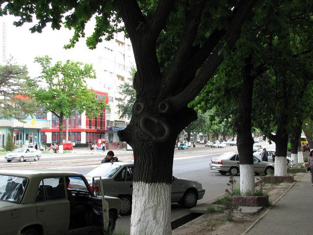 http://www.korostelev.ru/blog/i/travel/tashkent_2008/IMG_3070.jpg