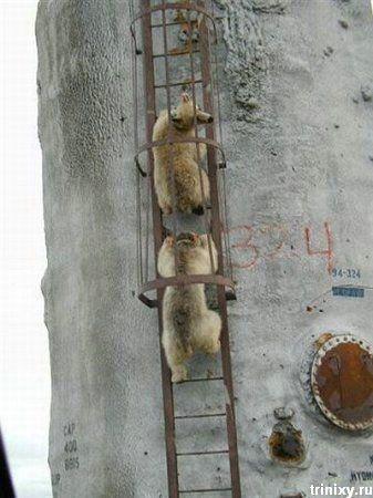http://ru.trinixy.ru/pics3/20080709/podborka_335_39.jpg