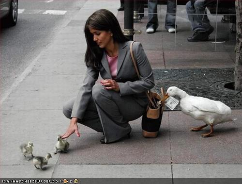 http://images.icanhascheezburger.com/imagestore/2008/8/20/c7d0771f-fc60-401c-b133-d8f469854199.jpg