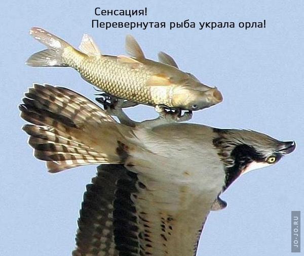 http://jo-jo.ru/uploads/posts/2008-10/1223288644_49.jpg