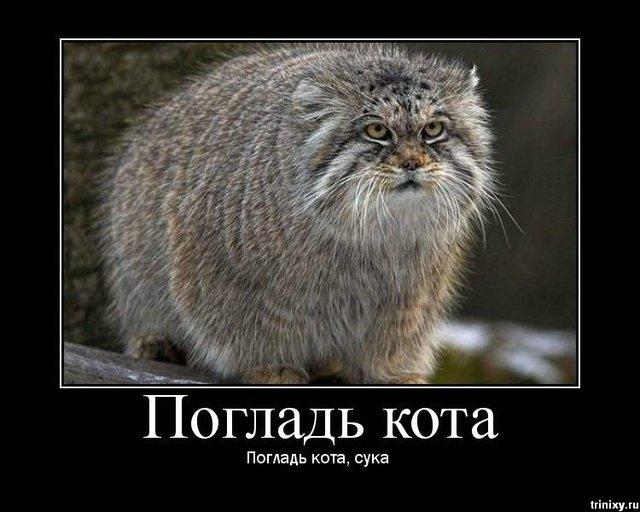 http://ru.trinixy.ru/pics3/20081013/podborka_462_08.jpg