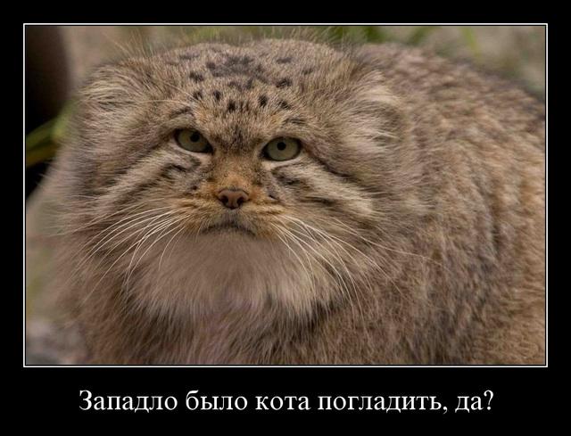 http://pics.cathody.com/lj/zapadlo_0001.jpg