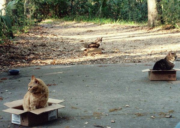 http://catinabox.org/060529_cats.jpg