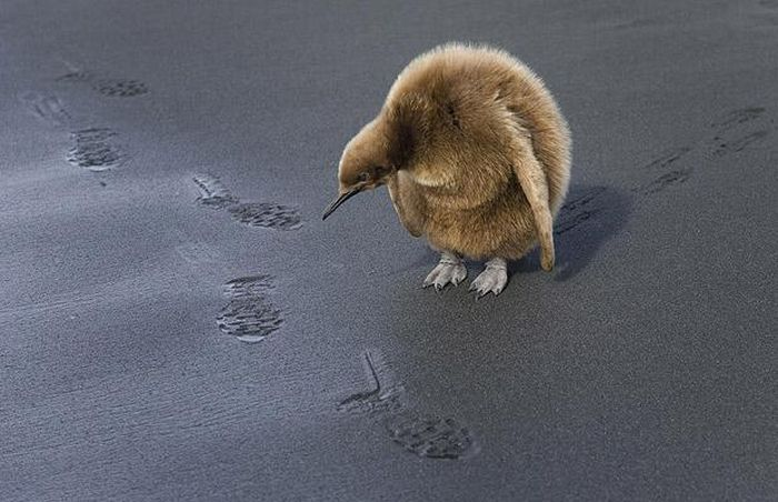 http://ru.fishki.net/picsw/082009/24/pics/082.jpg