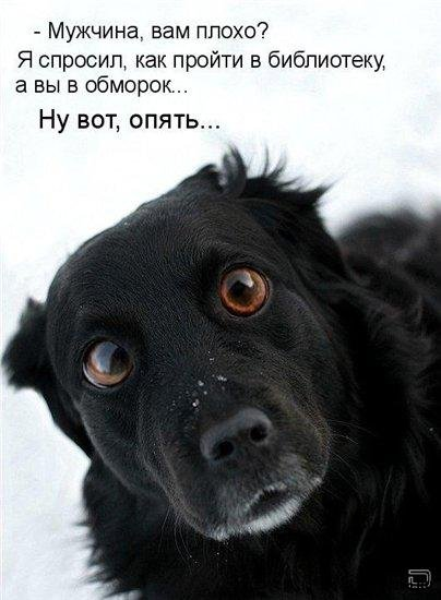 http://www.libo.ru/uploads/posts/2009-10/1255672071_1255610057-fotoprikoly-s-zhivotnymi-47.jpg
