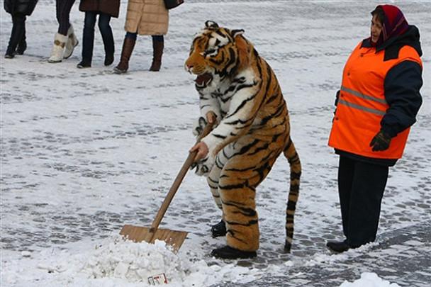 http://image.tsn.ua/media/images/608xX/Dec2009/eacd92041f_190741.jpg