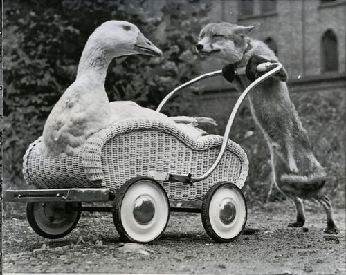 http://rulesofawesomeness.com/wp-content/uploads/2010/03/fox-pushing-duck-cart.jpg