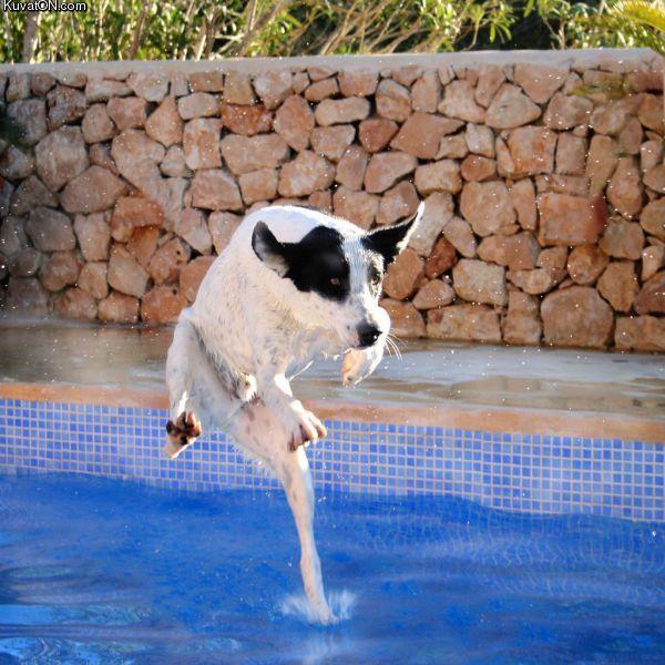 http://pics.kuvaton.com/kuvei/dog42.jpg