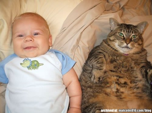 http://malcolm816.com/blog/wp-content/gallery/cats/fat-cat-and-baby.jpg