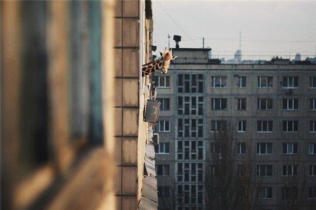 http://s005.radikal.ru/i209/1102/0b/967a5cfd6a4a.jpg