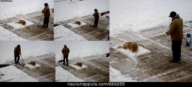 http://manzano.naurunappula.com/nn/1/573/443/s_lumenluonti_689255.jpg
