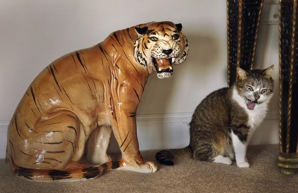 http://animals.nationalgeographic.com/exposure/nirvana/image/image/33699_0_608x394.jpg