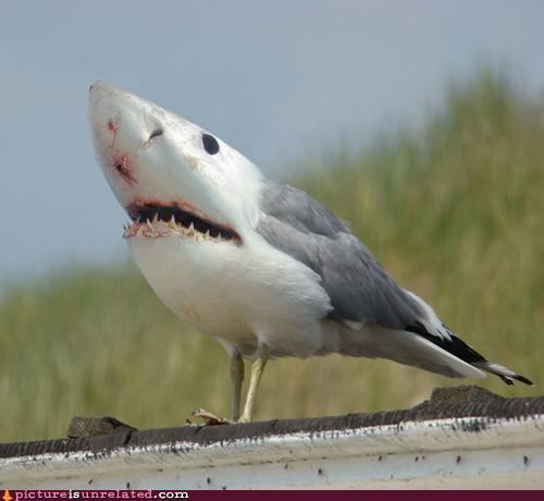 http://cheezpictureisunrelated.files.wordpress.com/2011/04/wtf-photos-videos-terrorbird.jpg