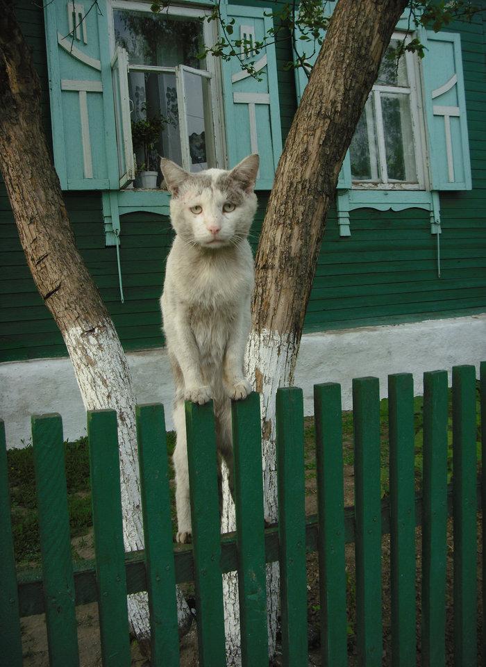 http://pics.livejournal.com/nakrylzebosoi/pic/000p909e/s1280x960.jpg