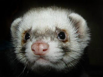 http://img.lenta.ru/news/2011/07/14/animals/picture.jpg
