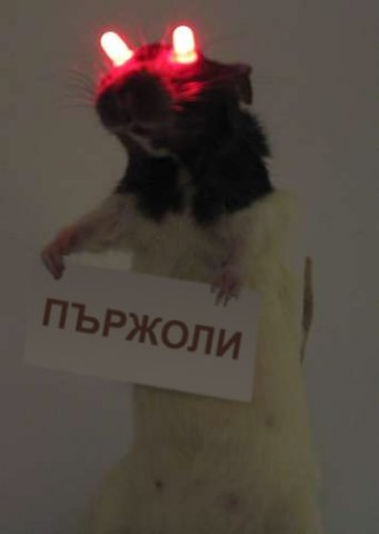 http://s017.radikal.ru/i410/1111/cc/f3612ed7e2cc.jpg