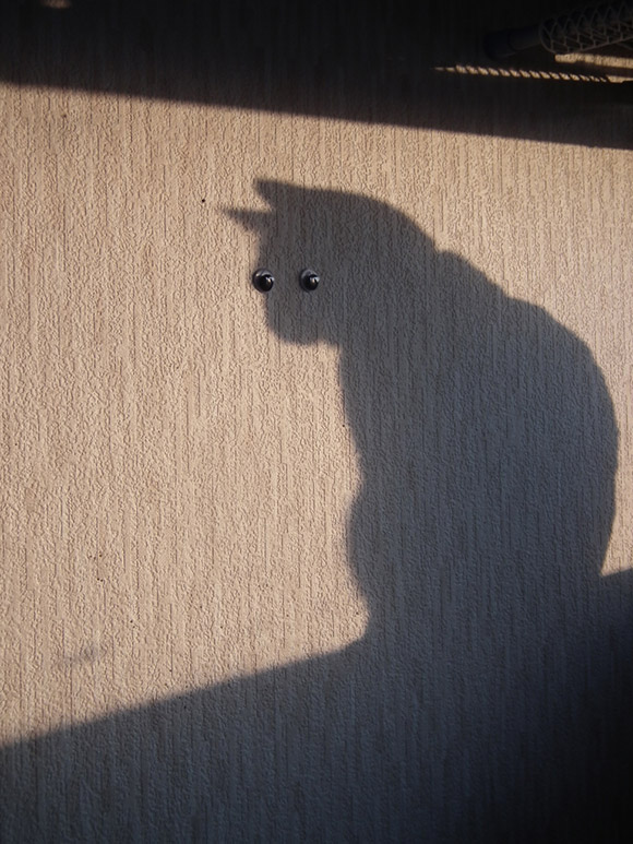 http://likecool.com/Gear/Pic/Cat%20269104583/Cat.jpg