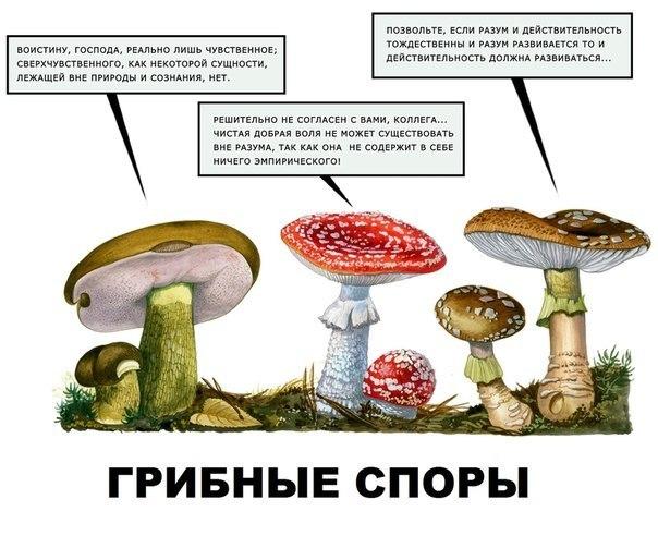 http://cs303207.userapi.com/v303207108/4295/Y8RjFE-cqb4.jpg
