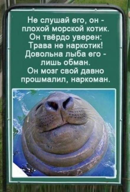 http://cs411116.userapi.com/v411116005/4265/UjBioDeV4dc.jpg