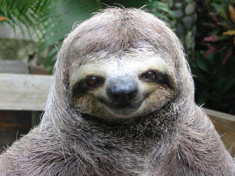 http://hardpressingquestions.files.wordpress.com/2013/02/happy-sloth.jpg