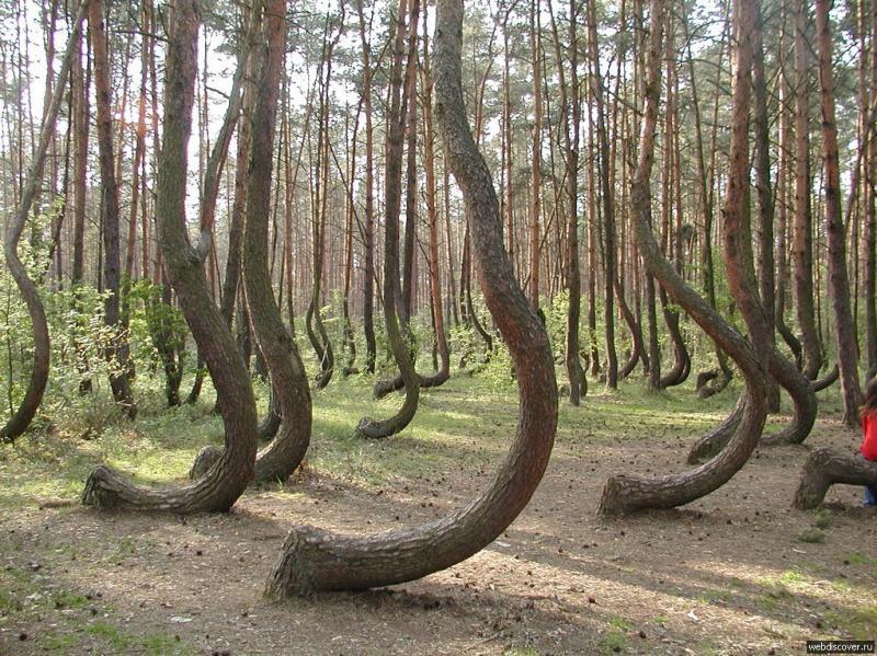 http://imgdiscover.ru/i/1/2011052514.jpg