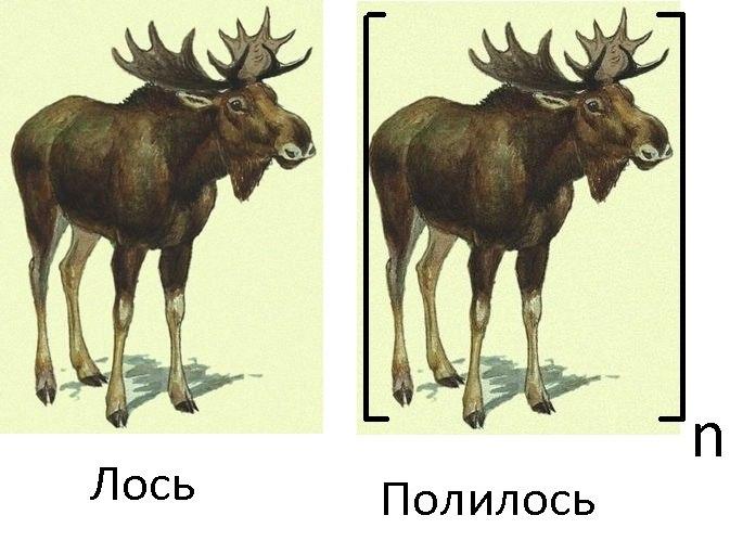 http://cs14102.vk.me/c417321/v417321381/8d12/ASsH3fcfoaw.jpg