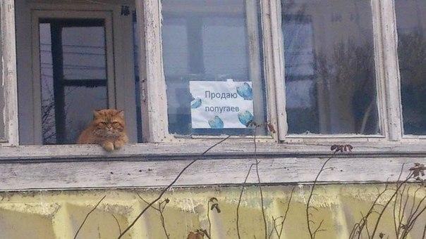 http://blog.stanis.ru/img/68502.jpg