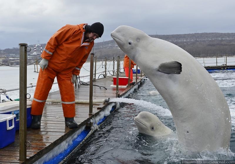 http://media.englishrussia.com/newpictures/station-to-study-sea-animals-at-Russian-pacific-coast/0_c4ad9_e83fcc50_orig.jpg