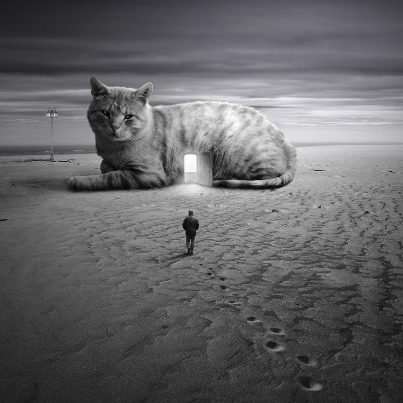 http://static.boredpanda.com/blog/wp-content/uploads/2014/12/Its-all-about-Animals3__880.jpg