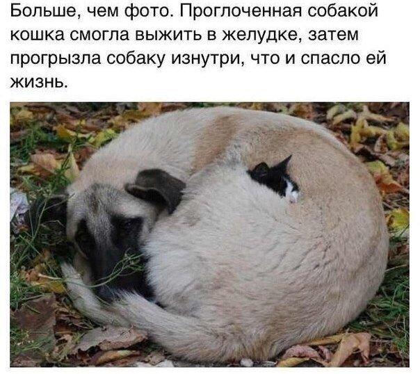 http://pp.vk.me/c624620/v624620964/27a6c/XJCWaziKpsg.jpg