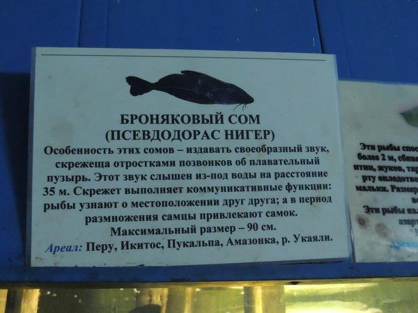 http://www.porjati.ru/uploads/posts/2015-07/1436382869_31.jpg